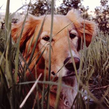 Becky, The Amazing Dog