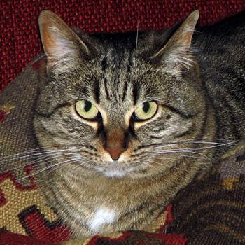 Tess, The Princess of Sweetness