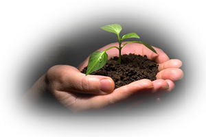 The energy of growth as seen in a seed sprouting from soil in the palm of a hand.