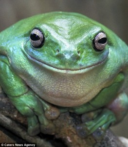 A smiling frog.