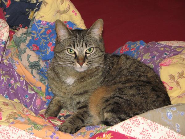 Tess at three years.