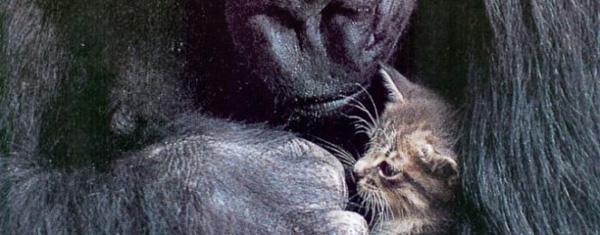 Koko with kitten