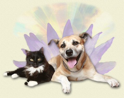 Happy dog and cat surrounded with Reiki Light.