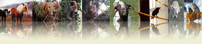 Tess for Pets Animal Reiki serves all kinds of animals, including people.