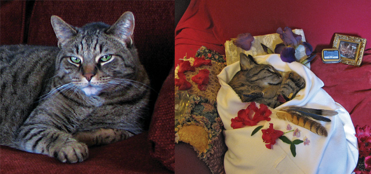 Joey, portrait and resting in peace.